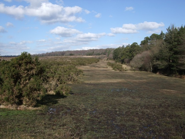 new forest holiday cottages in milford on sea